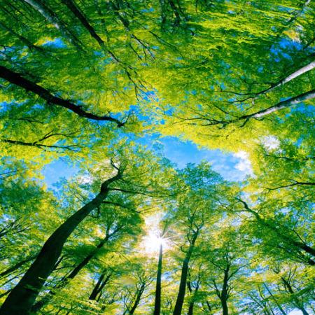 www.chapkhanehonline.ir | آسمان مجازی طرح شماره 10