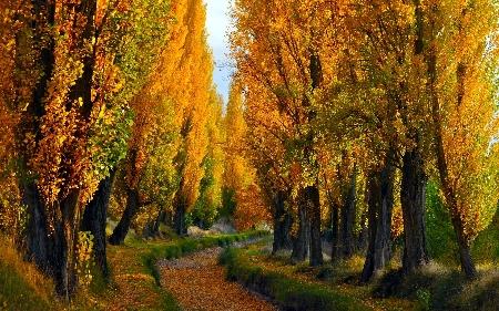 www.chapkhanehonline.ir | تصویر منظره طبیعی 6