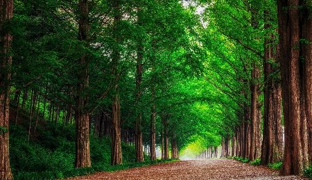 www.chapkhanehonline.ir | تصویر منظره طبیعی 8
