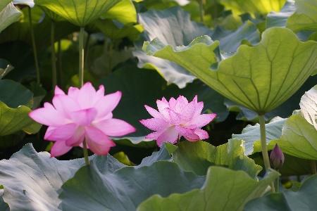 www.chapkhanehonline.ir | تصویر منظره طبیعی 22