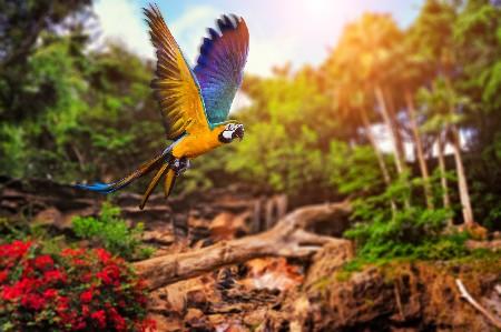www.chapkhanehonline.ir | تصویر منظره طبیعی 23