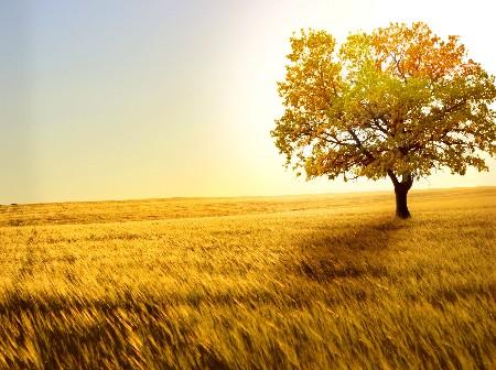 www.chapkhanehonline.ir | تصویر منظره طبیعی 24