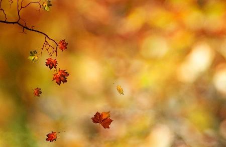 www.chapkhanehonline.ir | تصویر منظره طبیعی 28