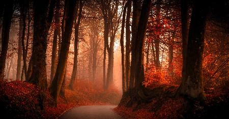 www.chapkhanehonline.ir | تصویر منظره طبیعی 32