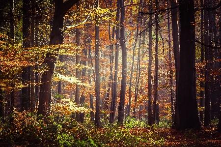 www.chapkhanehonline.ir | تصویر منظره طبیعی 34