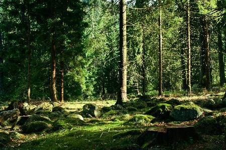 www.chapkhanehonline.ir | تصویر منظره طبیعی 35