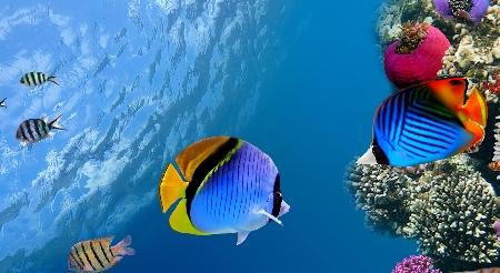 www.chapkhanehonline.ir | تصویر زیر دریا 2