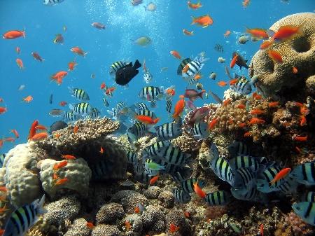www.chapkhanehonline.ir | تصویر زیر دریا 3