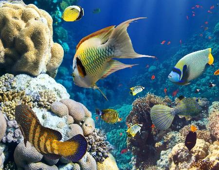 www.chapkhanehonline.ir | تصویر زیر دریا 6