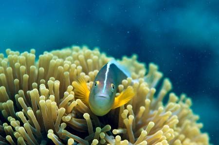 www.chapkhanehonline.ir | تصویر زیر دریا 7