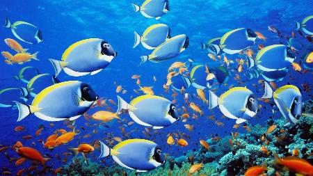 www.chapkhanehonline.ir | تصویر زیر دریا 8