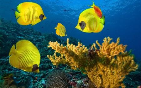www.chapkhanehonline.ir | تصویر زیر دریا 9