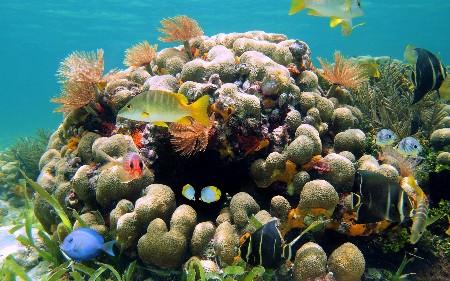 www.chapkhanehonline.ir | تصویر زیر دریا 10