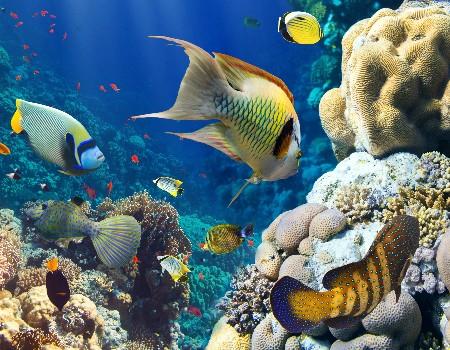 www.chapkhanehonline.ir | تصویر زیر دریا 11