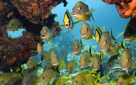 www.chapkhanehonline.ir | تصویر زیر دریا 12