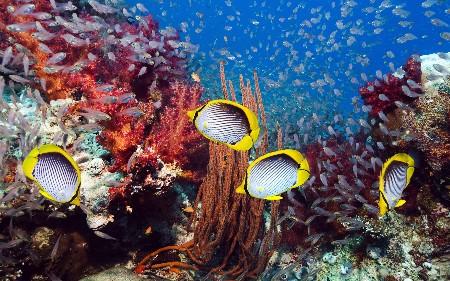 www.chapkhanehonline.ir | تصویر زیر دریا 13