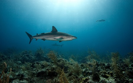 www.chapkhanehonline.ir | تصویر زیر دریا 14