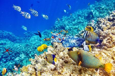 www.chapkhanehonline.ir | تصویر زیر دریا 17