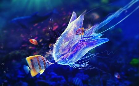 www.chapkhanehonline.ir | تصویر زیر دریا 20