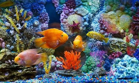 www.chapkhanehonline.ir | تصویر زیر دریا 21