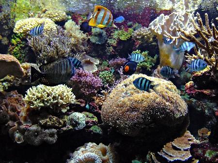 www.chapkhanehonline.ir | تصویر زیر دریا 22