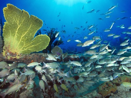 www.chapkhanehonline.ir | تصویر زیر دریا 23