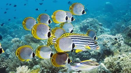 www.chapkhanehonline.ir | تصویر زیر دریا 24