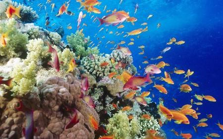 www.chapkhanehonline.ir | تصویر زیر دریا 25