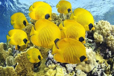 www.chapkhanehonline.ir | تصویر زیر دریا 27