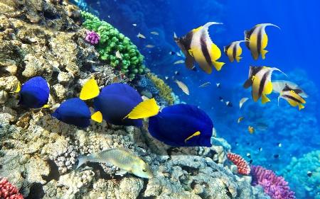 www.chapkhanehonline.ir | تصویر زیر دریا 28