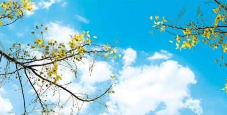 www.chapkhanehonline.ir | آسمان مجازی طرح شماره 27