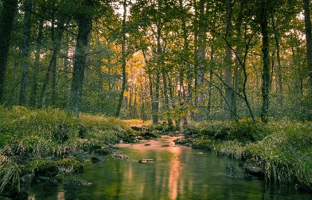 www.chapkhanehonline.ir | تصویر منظره طبیعی 26